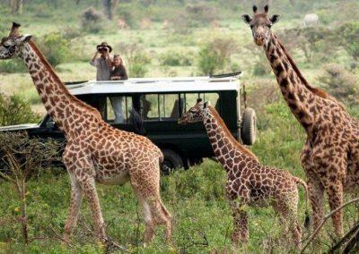 Kenya privát szafari