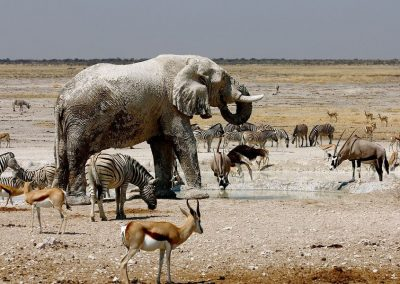 Namíbia privát szafari