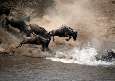 Tanzánia privát szafari