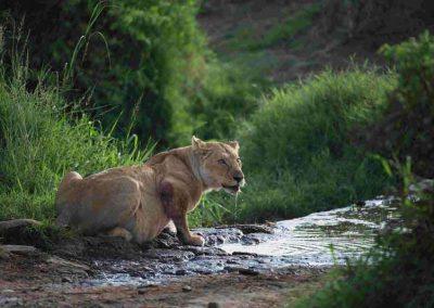 Uganda privát szafari